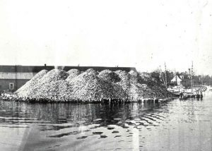 1940-1949 Oyster shell pile at the Warren Denton Company, Broome's Island, Maryland